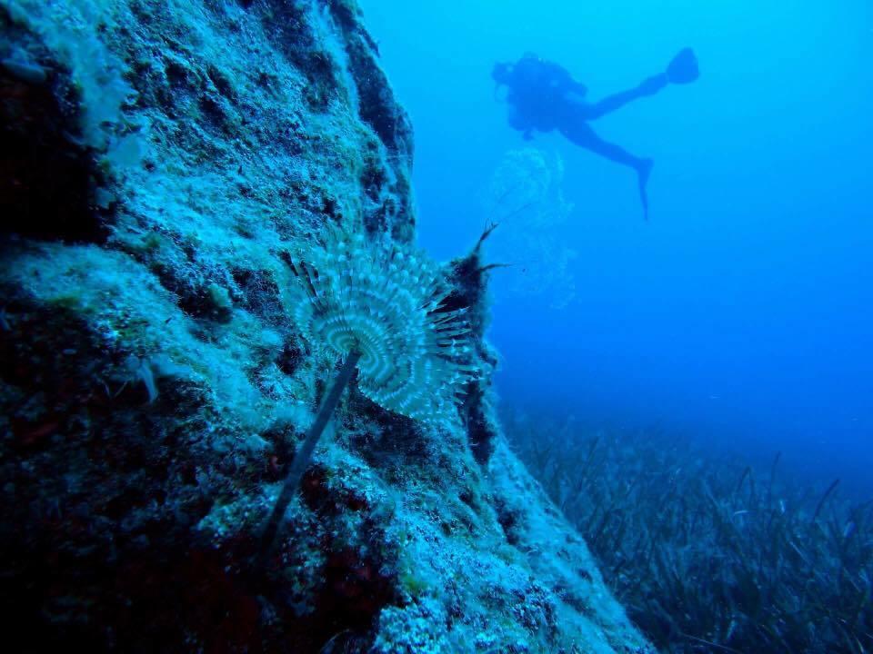 fish_diving