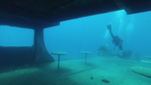 costandis-wreck-limassol-diving