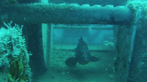 fish-wreck-limassol-diving